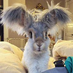 Meet Wally. He's an English Angora rabbit – and he's the cutest bunny in the whole world.