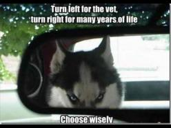 Most funny animal memes and humor pics | Quotes and Humor: Funny Animals, Giggle, Dogs, Husky, Funny Stuff, Funnies, Humor, Things