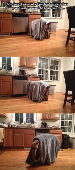 My dog does this too!!: Funny Animals, Dogs, Funny Pictures, Grey Hound