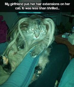 Not in the mood for being fabulous // funny pictures - funny photos - funny images - funny pics - funny quotes - #lol #humor #funnypictures: Cats, Animals, Funny Pictures, Hairs, Funny Stuff, Funnies, Hair Extensions