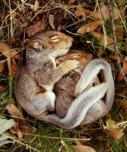 sleepy time in the fall: Animals, Cuteness, Sweet, Nature, Pet, Baby Squirrels, Creatures, Adorable, Things