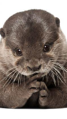 So sweet! Otter :)
