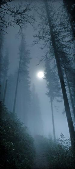 Solitude, not just for hermits anymore.: Forests, Foggy Moonlit, Nature, Foggy Forest, Trees, Full Moon, Night, Moonlight, Moonlit Forest