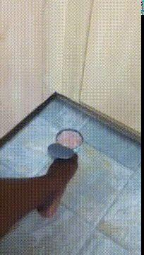 The claw - http://www.seethisordie.com/catgifs/the-claw/ #animals #cats #funny #fun