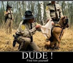 The dog's face is hilarious! Lol: Animals, Dogs, Funny Stuff, Humor, Funnies, Funny Animal, Funnystuff