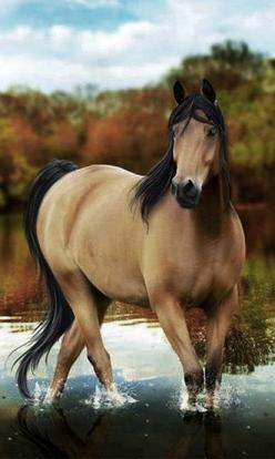 The most amazingly beautiful horse I've ever seen---AND it's my favorite---a buckskin!!!! AWESOME!!: Beautiful Buckskin, Horse N, Buckskin Horses, Amazing Horses, Beautiful Horses Buckskin, Animals Horses