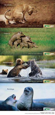 We are animals…: Planets, Animals, Funny Ads, Funny Stuff, Humor, Funny Animal, Animal Planet