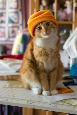 We put an orange hat on Sam for October. He looked a little less sassy than usual.: Kitty Cat, Animals, Orange Cat, Pet, Cats In Hats
