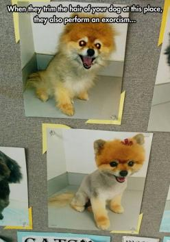 We wash their fur with the holiest water we can find! **This costs more than a normal cut, but that's to be expected.: Funny Pictures, Funnypictures, Dog Grooming, Exorcism Special, Humor, Funnies, Funny Animal, Hilarious