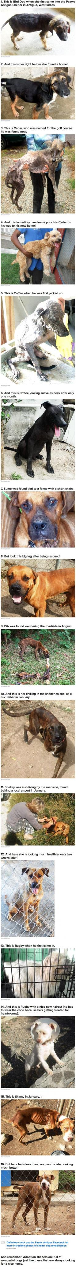 16 Incredible Transformation Photos Of Shelter Dogs »» http://www.facebook.com/paaws.antigua: Dogs Helping People, Animals Rescued, Happy Things Pictures, People Helping Animals, Animal Rescues, Animal Shelter