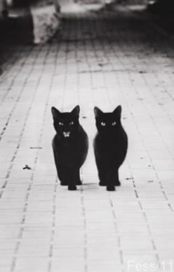 2 black cats: Animals, Kitten, Meow, Black Cats, Baby, Things, Blackcats, Photo