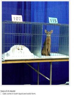 21 Times Tumblr Told The Truth About Cats     cats come in both liquid and solid form: Funny Tumblr Cats, Tumblr Cats Funny, Funny Cats Tumblr, Tumblr Animals Funny, Funny Stuff, Tumblr Funny Cats, Liquid Cat, Cats Tumblr Funny