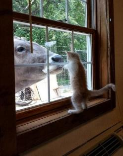 """Thank goodness, the milk has arrived…"": Cats, Animals, Kitten, Friends, Pet, Cow, Funny Animal, Kitties, Photo"