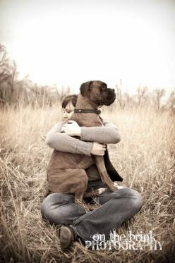 Always a lap dog & best friend Boxer, pup, portraits, On The Brink Photography: Brink Photography, Boxer Dogs, Best Friends, Lap Dogs, Dogs Boxers, Boxer Dog Photography, Friend Boxer, Animal