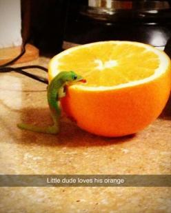 Best New Funny Animals photos 2015 (01:46:22 AM, Tuesday 17, February 2015 PST) – 13 pics: Funny Animals, Funny Animal Picture, Orange, Adorable Animals, Pet, Reptile