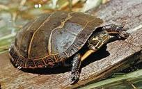 Catching some rays: Small God Loves, Box He Swam, Puddle He Climbed, Brooke S Fav, Delta Zeta, Painted Turtles, Fav Turtles