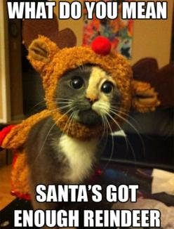 : Cats, Reindeer, Animals, Santa S, Christmas, Funny Animal, Things, Kitty