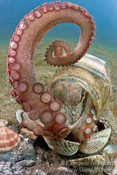 Clepto Octopus | Flickr - Photo Sharing!