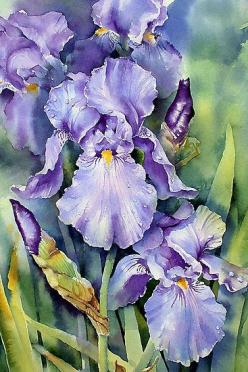 Dewdrop Irises by Ann Mortimer: Art Watercolor, Watercolor, Purple Iris, Dewdrop Irises, Watercolor Flowers, Anne Mortimer, Painting, Watercolour