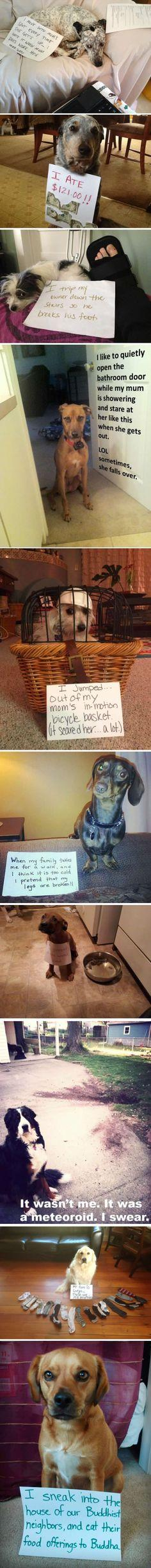 Dog shaming site --one of the joys of the Internet (Don't think any dogs were hurt in the production of these photos): Dog Shame, Dog Shaming, Bad Dog, Dog Confessions, Animal Shaming, Pet Shaming