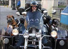 Double sidecars for dogs.