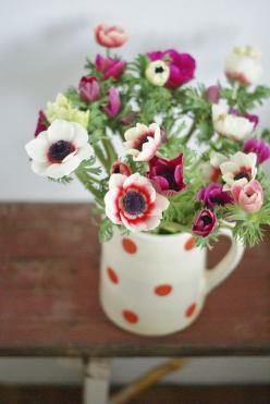 Flowers: Idea, Polka Dots, Anemone, Flower Arrangements, Flower Power, Flowers, Garden, Pretty Flower