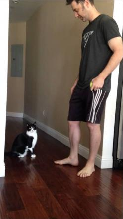 Franzie the very affectionate tuxedo cat reaches up for a great big hug from his human in this video posted by Tricia Carr. Sometimes, however, Franzie does completely miss his mark. via Daily Pick...: Big Hug, Funny Cats 2, Animals Cat, Cats Funny Videos