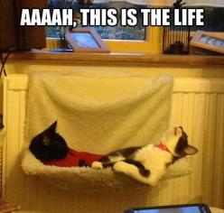 Funny Pictures Of The Day - 103 Pics: Funny Animals, Cats Relaxing, Life, 103 Pics, Funny Pictures, Funnypictures, Pet, Crazy Cat, Cat Lady