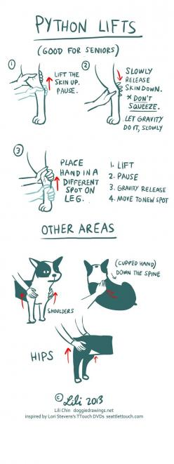 Helpful stretches. This one is especially good for senior pups.: Dogs Joints, Dog Massage, Dogs Tips, Senior Pet, Ttouch Dogs, Arthritic Dogs, Massage For Dogs, Senior Dog, Dog Life