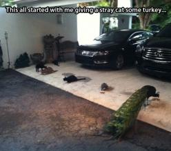 Hilarious!: Cats, Giggle, Animals, Funny, Funnies, Humor, Stray Cat, Peacock