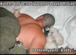 home from Afghanistan: Cats, Animals, Pet, Funny, Crazy Cat, Kittens, Kitties, Kitty, Cat Lady