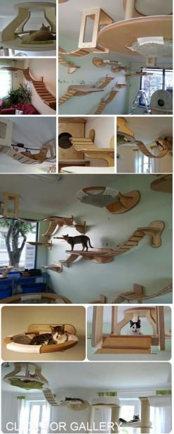 How ambitious am I feeling today?!? I think this would be perfect above the couches.: Crazy Cats, Cat Furniture, Cat House Idea, Couch, Crazy Awesome House, Cat Tree, Cat Room, Diy Cat House, Animal