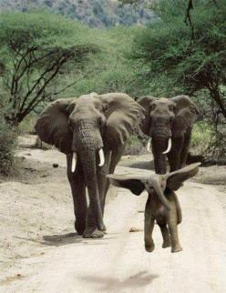 How could you not smile looking at this ? :-): Animals, Baby Elephants, Happy, It S Dumbo, Elephant, Funny, Things, Smile, Photo