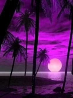 ~ http://VIPsAccess.com/luxury-hotels-caribbean.html: Favorite Color, Purple Paradise, Palm Trees, Purple Passion, Purple Sunset, Things Purple, Color Purple, Purple Haze, Purple Palm