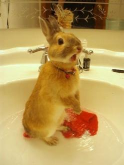 """HUMAN! HUMAN! THIS IS WET. THIS APPEARS TO BE VERY WET. HUMAN! MY FEET ARE ALSO WET. IT IS WET. WHAT ARE YOU DOING?  NO.  NO PICTURES PLEASE."" I repinned this just for the comment :): Rabbit, Funny Animals, Stuff, Adorable Animals, Bunny Bath, Pets,"