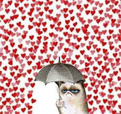 """I'm going to put this on my Valentines this year. And on the back, they will say """"I TOLERATE YOU."""": Cats, Cat Valentine, Heart, Grumpycat, Funny, Valentines Day, Valentinesday, Grumpy Cat, Valentine S"""