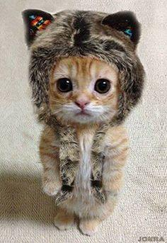 I'm ready to go to Alaska. Did you remember my snow shoes?