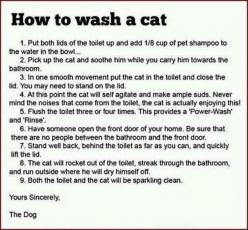 I just laughed so hard!: Cats, Animals, Dogs, Wash, Funny Stuff, Humor, Funnies