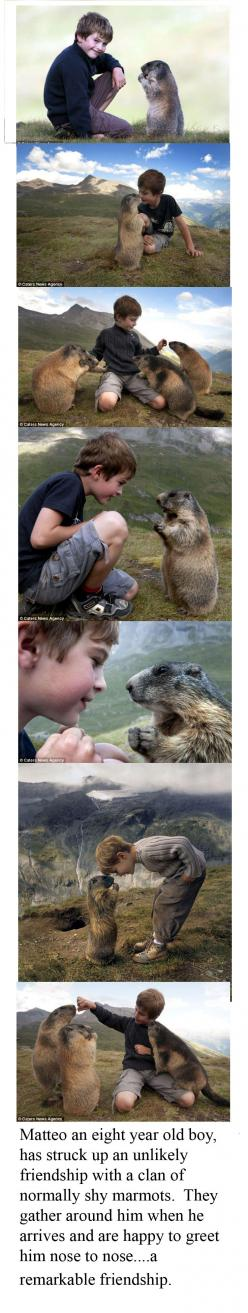 I love stories of unusual or unexpected friendships <3: Animal Friendship, Wild Animals, Gods Majesty, Creatures, Friendly Marmot, Animal Whisper, Kid