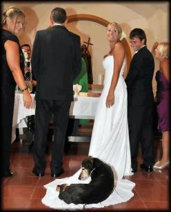I see this as being a disturbingly real possibility for many of my friends.: Animals, Dogs, Wedding Ideas, Weddings, Pet, Funny, Photo, Friend