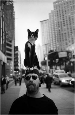 If my cat would do this  I would take her everywhere!!: Cats, Animals, Guy, Pet, Crazy Cat, Kitty, Street Photography