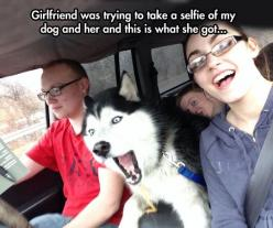 Is that Moon Moon driving?: Caption Submitted, Funny Animals, Selfies, Funny Dogs, 16 Caption, Funny Pictures, Funny Husky Pictures, Funny Photos
