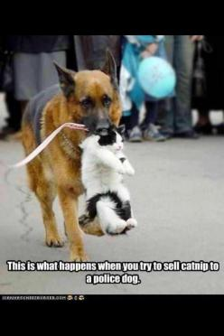 K9's~~~~  ROFLMBO ... I love this!: Funny Animals, Cats, Friends, Dogs, Stuff, Pets, German Shepherds, Funnies