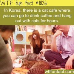Koreas cats cafe - WTF fun facts: And in Japan; As well as DOG Cafes and a Sheep cafe in Korea (Hongdae to be exact) :D: Wtf Fun Facts, Cat Cafe, Korea S Cats, Fact 1826, Cats Cafe, Crazy Cat, Funfacts, Funny Fun Facts, Cat Lady