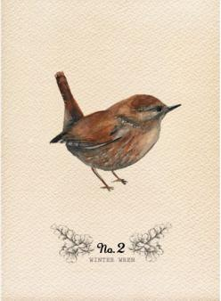 little wren...part of a field journal by Olivia Kanaley: Printable, Birds Art, Watercolor Bird, Nature, Little Birds, Bird Art, Winter Wren, Animal