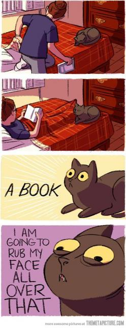 Living with cats. Every time. HAHAHA omg that's what my cat does EVERY time he sees me holding a book! XD: Cats, Book, Crazy Cat, So True, Funny Stuff, Kitty, Animal, Cat Lady