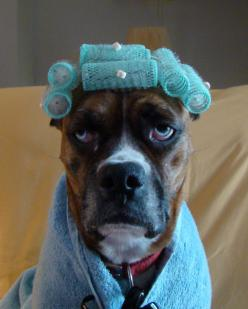 Lol the face says it all #boxer #dog: Doggie, Animals, Boxer Dogs, Cuteness, Funny Stuff, Boxers, Facials, Things, Smile