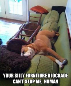LOL :) This has happened at my house plenty of times. They always find a way!: Animals, Dogs, Silly Human, Pet, Funny Stuff, Funnies, Furniture Blockade, Funny Animal