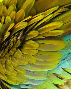 Macaw feathers. #parrot #bird #green: Colour, Color Palettes, Inspiration, Macaw Feathers, Green Feathers, Pattern, Texture, Art, Birds