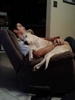 Nap time.: Animals, Lap Dogs, Pets, Lap Lab, Friend